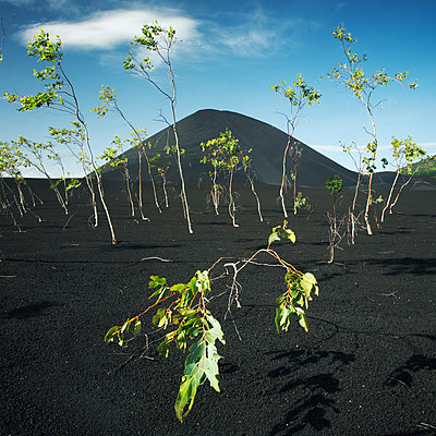 Cerro Negro, Vulkan Nicaragua - p844m880741 von Markus Renner