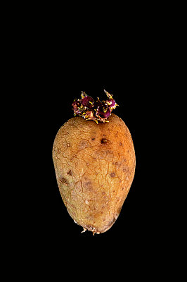 Potatoe - p8760239 by ganguin
