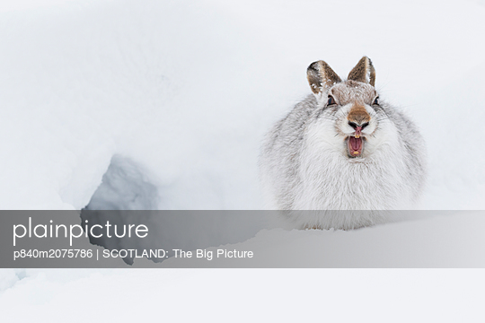 p840m2075786 von SCOTLAND: The Big Picture