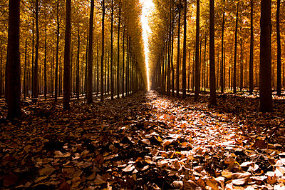 Scenic view of trees amidst fallen autumn leaves in forest - p1166m2060644 by Cavan Social