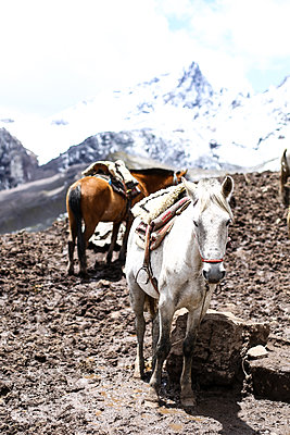 Horses in the mountains - p1643m2229349 by janice mersiovsky