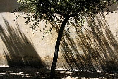 Straßenbaum - p277m883369 von Dieter Reichelt