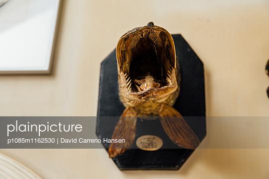 Ausgestopfter Gruselfisch - p1085m1162530 von David Carreno Hansen