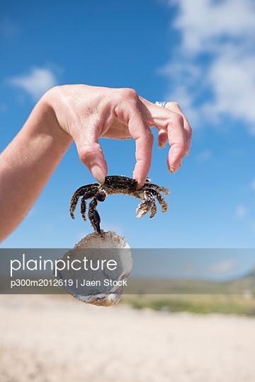 Hand holding crab, holding shell - p300m2012619 von Jaen Stock