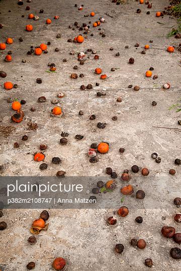 Verfaulende Mandarinen - p382m2108747 von Anna Matzen