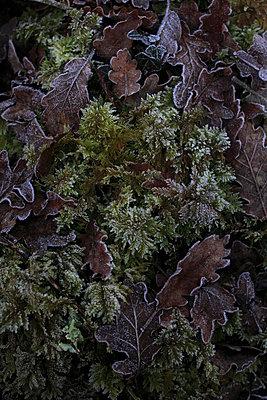 Frozen plants - p8490014 by Eric Zeziola