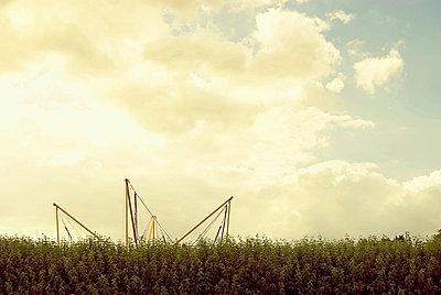 Hedge - p1089m855319 by Frank Swertz