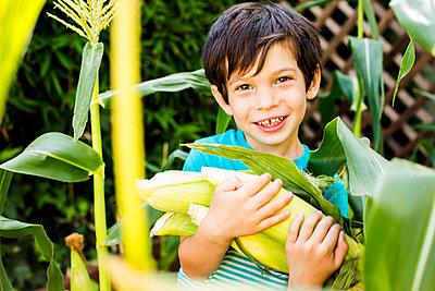 Mixed race boy picking corn in garden - p555m1411243 by Adam Hester