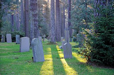 Graveyard in forest - p575m714932 by Stefan Ortenblad
