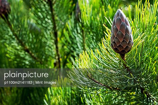 07.01.19 - p1100m2141183 by Mint Images