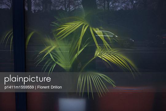 Pflanze schwitzend - p1411m1559559 von Florent Drillon