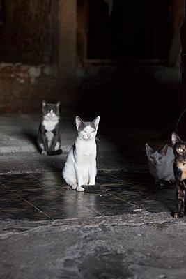 Vier Katzen in düsterer Umgebung - p045m1492320 von Jasmin Sander