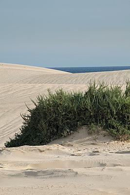 Sanddünen mit Grün - p1356m1502901 von Markus Rauchenwald
