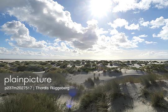 Dünenlandschaft auf Amrum - p237m2027517 von Thordis Rüggeberg