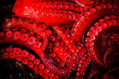 Octopus tentacles for sale in Tsukiji Market, Tokyo, Japan. - p934m1177221 by Dominic Blewett
