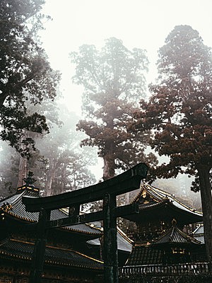 Traditional Torii in front of Shinto temple, Japan - p961m2253625 by Mario Monaco