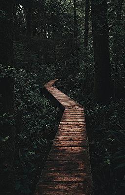 Walkway Rainforest - p1341m1559666 von Conny Hepting