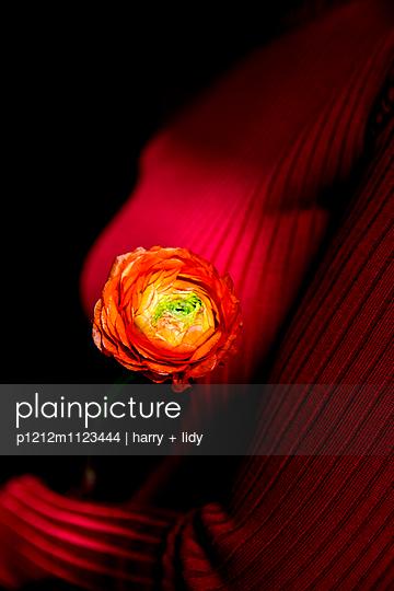 Rote Ranunkel im Roten Pullover - Detail - p1212m1123444 von harry + lidy