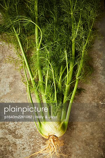 Fresh fennel - p1640m2261082 by Holly & John