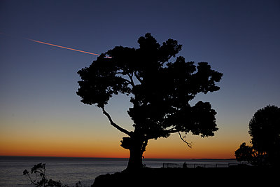 Tree and Sunset - p1260m1074063 by Ted Catanzaro
