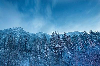 Low angle view of snow covered trees against sky at Wells Gray Provincial Park - p1166m1486079 by Cavan Images