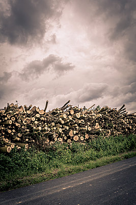 Pile of wood - p1402m1586182 by Jerome Paressant