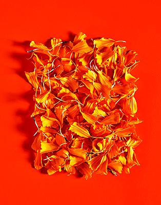 Petals - p1397m2076474 by David Prince
