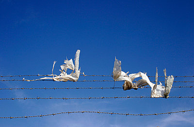 Plastic sheeting caught in barbed wire - p3881843 by Astrid Schulz