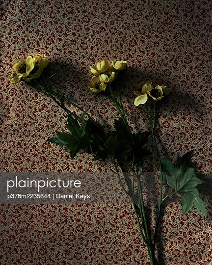 Flowers on floral wallpaper - p378m2235644 by Daniel Keys