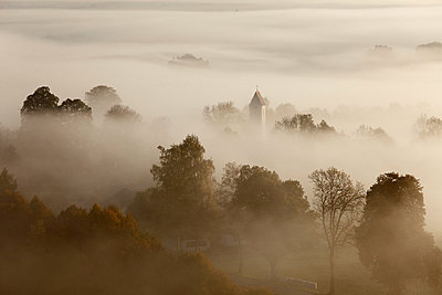 View of tree in fog - p300m659962f by Martin Siepmann