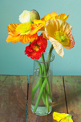 Poppies in a vase - p4730185f by Stock4B