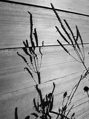 Schattenspiel - p887m778334 von Christian Kuhn