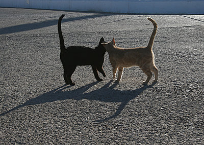 2 cats in a love mood - p985m1463366 by lia g.