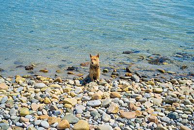 Hund sitzt am Strand - p1082m2099677 von Daniel Allan