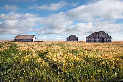 Three barns - p836m1463185 by Benjamin Rondel