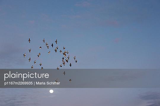 Flock of birds - p1167m2269935 by Maria Schiffer