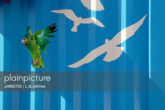 Birds stickers on blue wall
