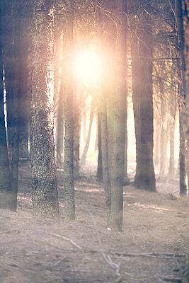 Morgens im Wald - p1280m1477492 von Dave Wall