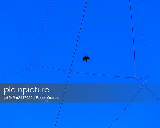 Black bird flying - p1542m2197022 by Roger Grasas