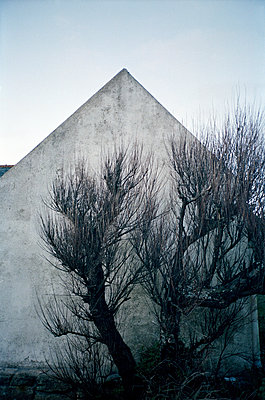 House and tree - p1141m943262 by Annette Fischer