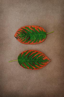 Pair of Autumn leaves - p1228m2125853 by Benjamin Harte