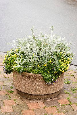 Blumenkübel - p260m912578 von Frank Dan Hofacker