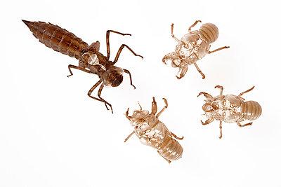 Insektenhüllen - p4150331 von Tanja Luther