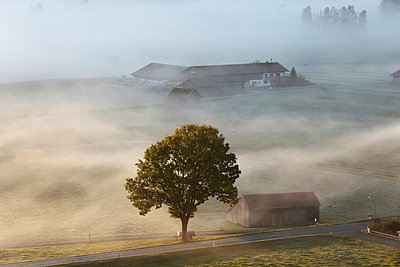 View of house in fog - p300m660030f by Martin Siepmann