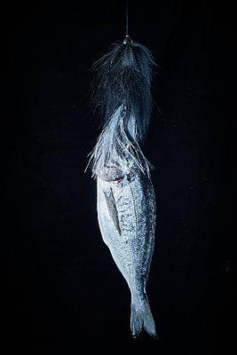 Fisch mit Trolling Fischköder - p851m1214808 von Lohfink