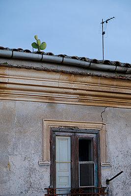 Cactus on roof - p1105m2082533 by Virginie Plauchut