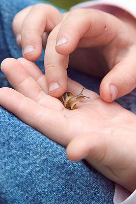Kleine Schnecke - p2430176 von Claudia Anys