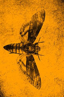 Moth  - p450m1092501 by Hanka Steidle
