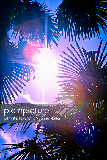 Palm trees in backlight - p1149m1573481 by Yvonne Röder