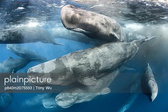 p840m2075593 von Tony Wu